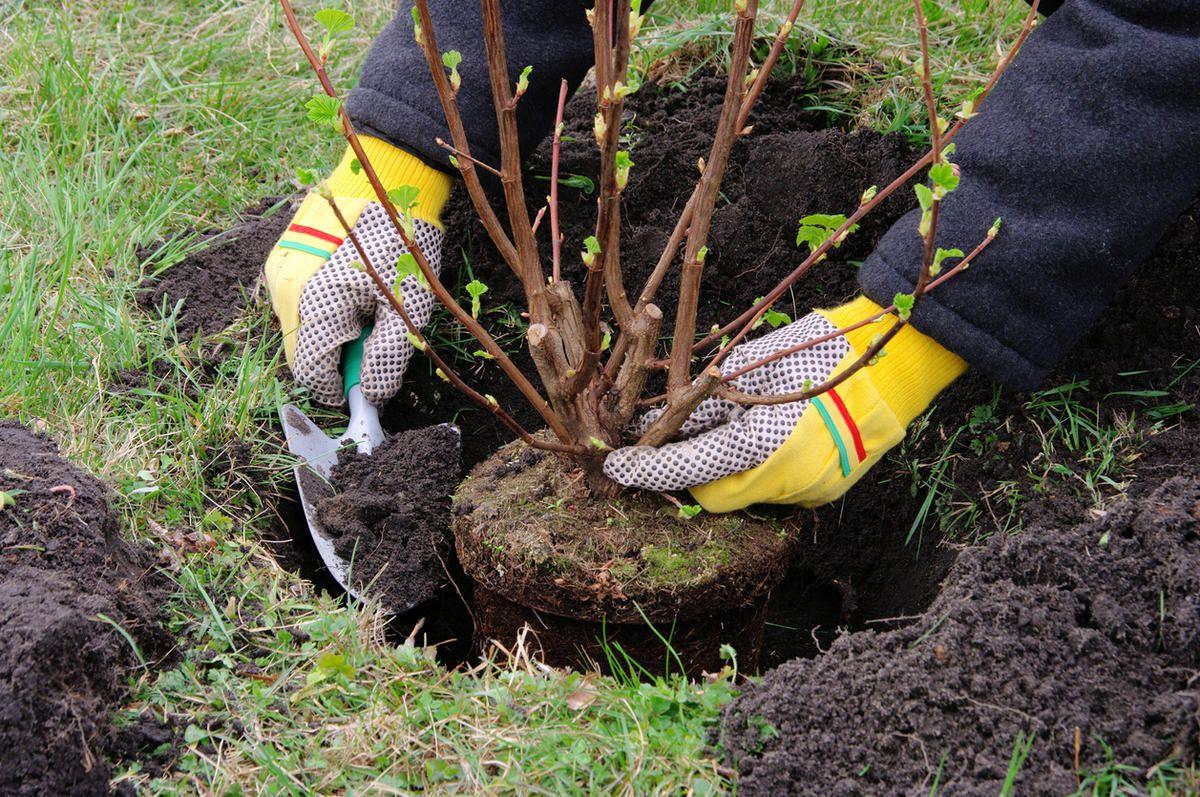 До конца осени в Ставрополе озеленители высадят еще более 2,5 тысяч деревьев и 240 тысяч цветов
