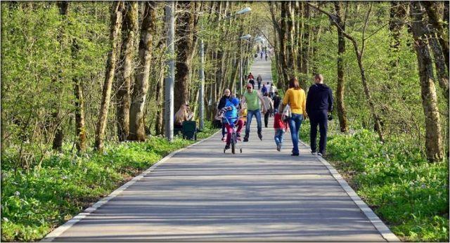 В Год экологии Ставрополь вступает с 50 гектарами новых лесов