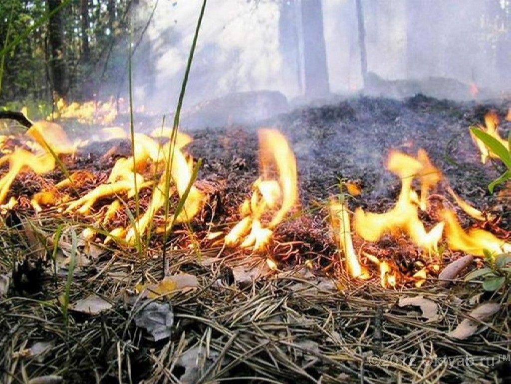 В Кочубеевском районе Ставрополья прогнозируется 5 класс пожароопасности