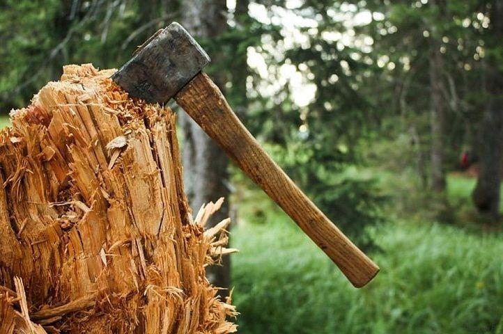На дачах Ставрополя незаконно вырубают деревья