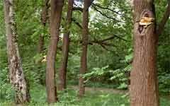 В Буденновском районе мужчина привязал и оставил детей в лесу