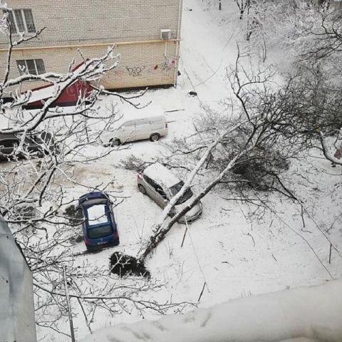 В Ставрополе дерево упало на припаркованный автомобиль