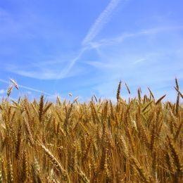 Ставрополье признано самым эффективным регионом в сельхозпроизводстве