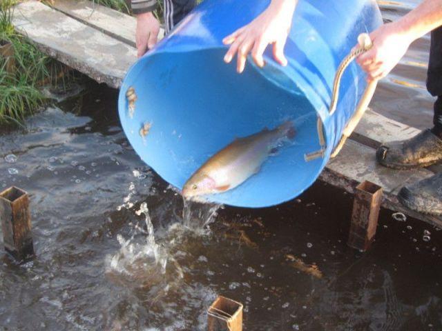 В ставропольскую реку Ташла планируют запустить форель