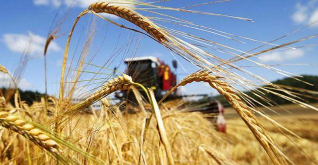 На Ставрополье собрали более 8 миллионов тонн зерна