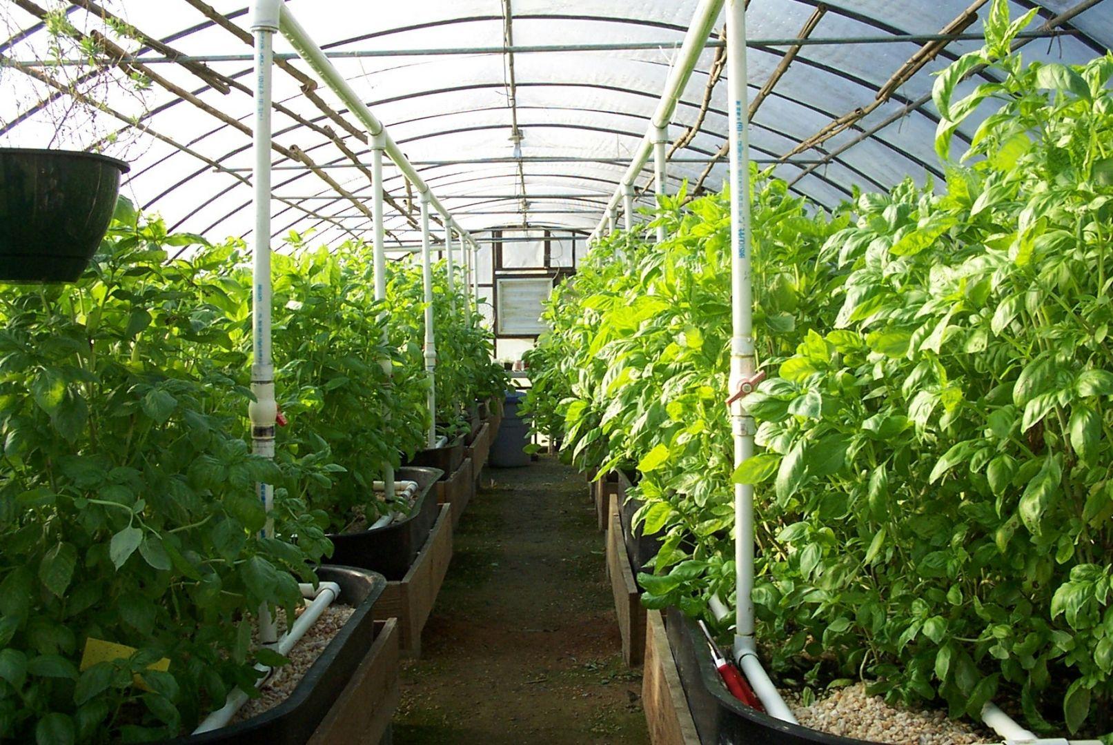 Площадь теплиц в Ставропольском крае превысила 190 гектаров