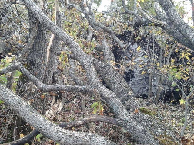 На Северном Кавказе из-за сильного ветрапострадалиоколо 250 га леса