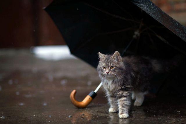 В выходные на Ставрополье прогнозируются дожди