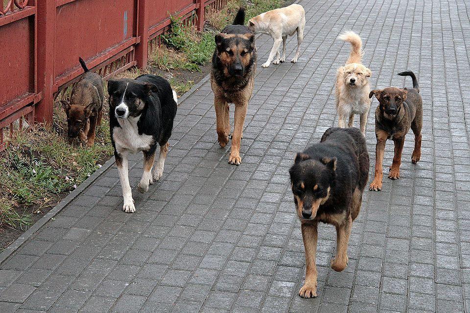 В Кисловодске приступили к отлову безнадзорных животных