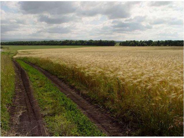 Шотландский фермер переехал в ставропольскую глубинку и сделал убыточное предприятие процветающим
