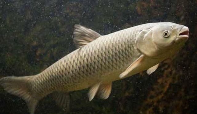 Заражённая паразитами рыба обнаружена на Ставрополье