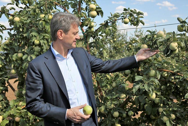 Ставропольские сады до конца года вырастут на 600 гектаров