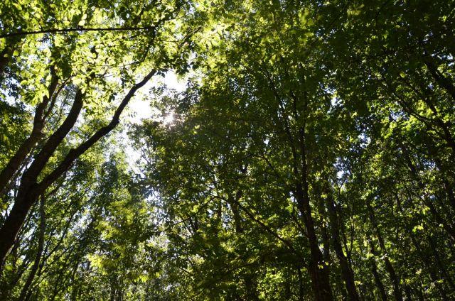 На Ставрополье утвердили перечень особо охраняемых природных территорий краевого значения