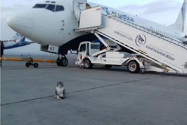 Ставропольский кот-пилот Басик стал негласным талисманом аэропорта Минеральных Вод