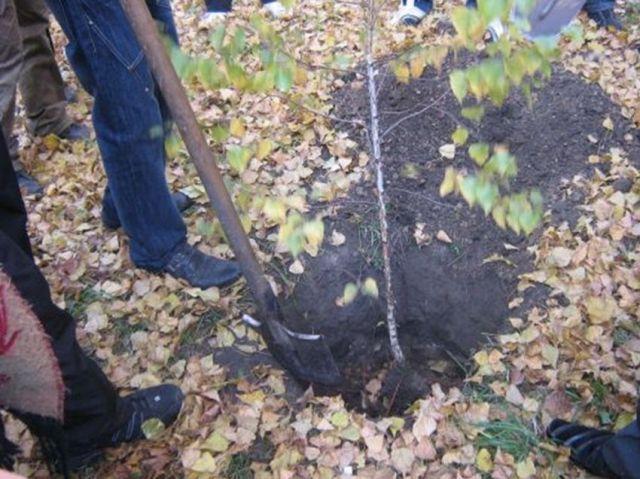 В Ставрополе на улице Доваторцев высадят 800 деревьев