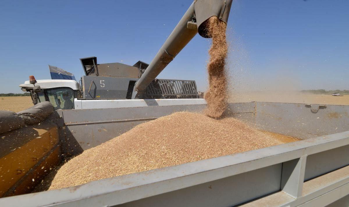 В Ставропольском крае покупатель пшеницы обманул фермера на один миллион рублей