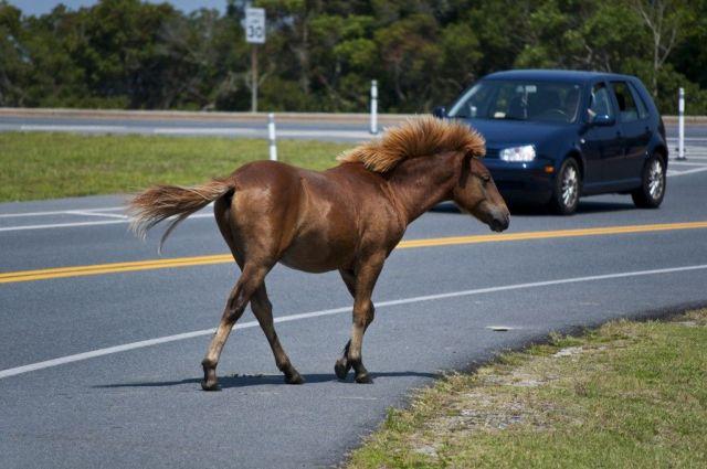 На Ставрополье водитель «Нивы» сбил лошадь