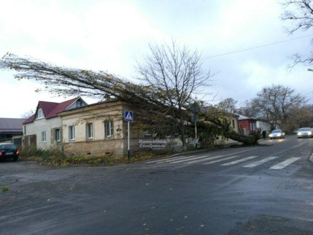 В Ставрополе сильный ветер повалил дерево и сдул гигантскую кроссовку