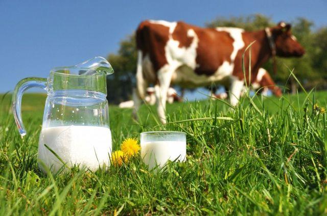 Молочный фестиваль прошёл на Ставрополье