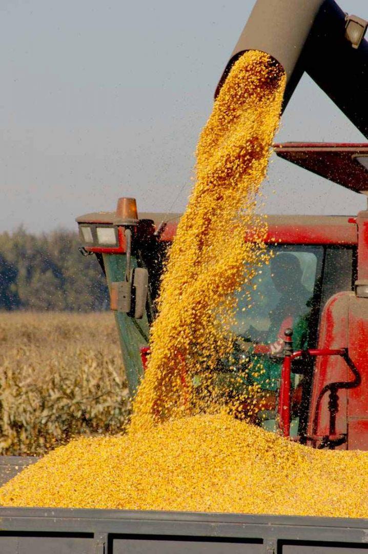 Со ставропольских полей убирают урожай кукурузы