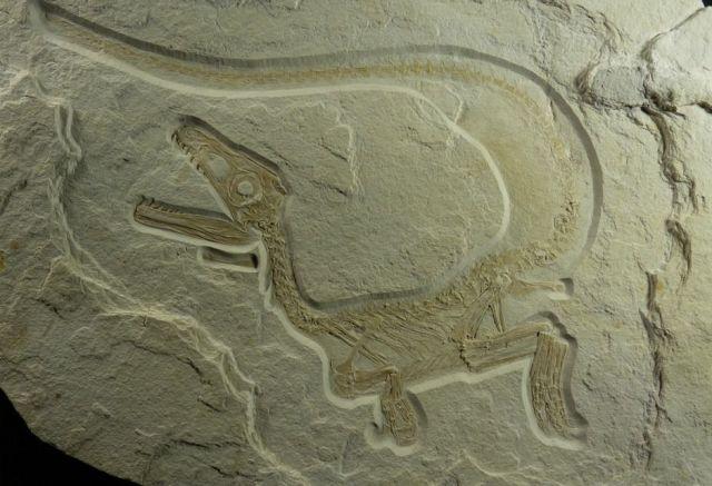 Новой достопримечательностью Ставрополья может стать место, где сохранились следы динозавра