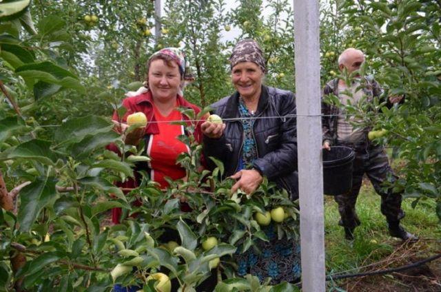 Суперинтенсивные сады разобьют в пяти районах Ставропольского края