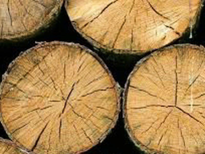 Житель Ставрополья ответит за незаконную рубку деревьев