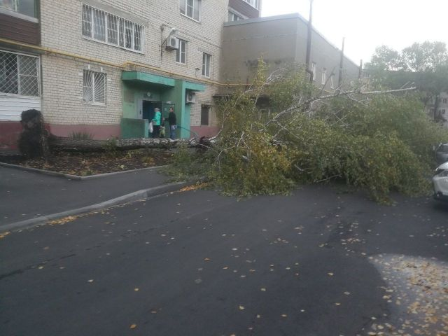 Во дворе многоэтажного дома в Ставрополе упало дерево