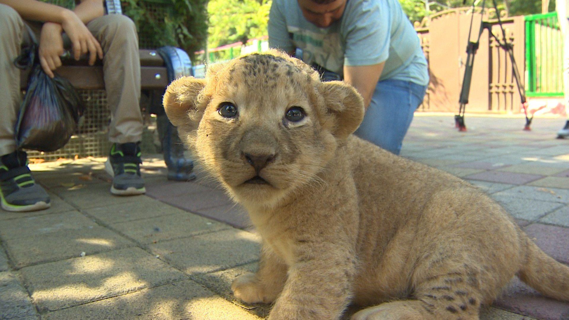 Два львенка родились взоопарке вСтаврополе