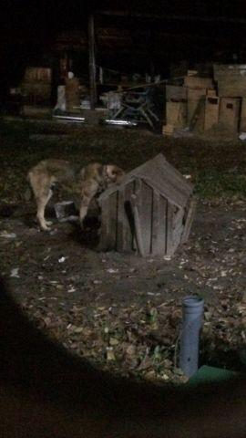 В зоопарке Пятигорска сторож избил собаку
