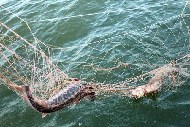 На Ставрополье рыбаки заплатят 100 тысяч рублей штрафа за ловлю в неположенном месте