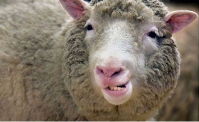 За кражу овец ставропольца объявили в федеральный розыск