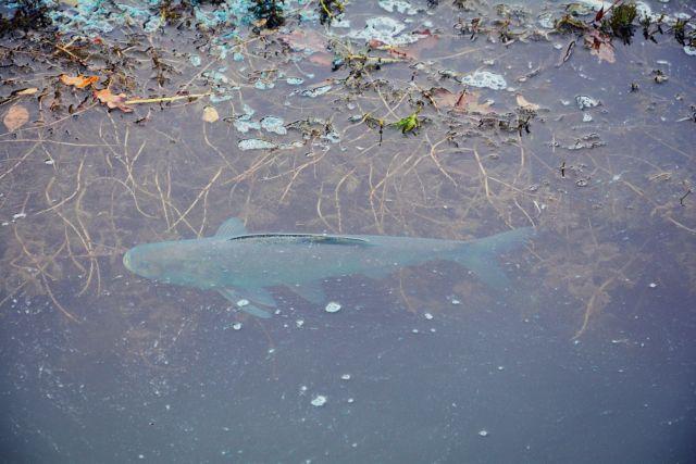 Тонну толстолобиков выпустили в Комсомольское озеро