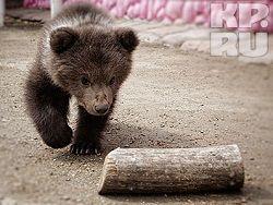 В ставропольском зоопарке родился медвежонок