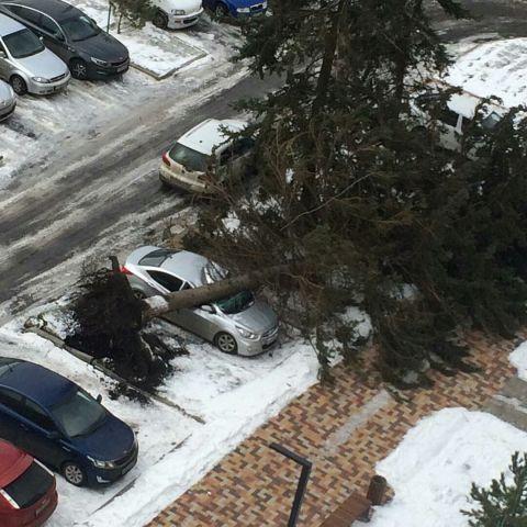 В Ставрополе порывы сильного ветра ломают ветви деревьев, срывают металлоконструкции