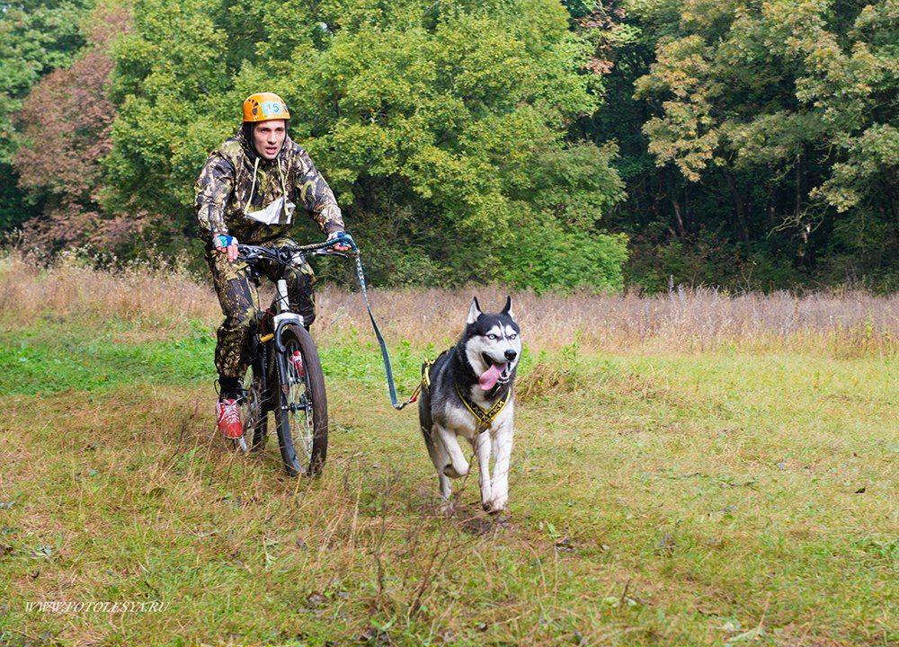 ВСаратовской области пройдет турнир погонкам наездовых собаках среди параспортсменов