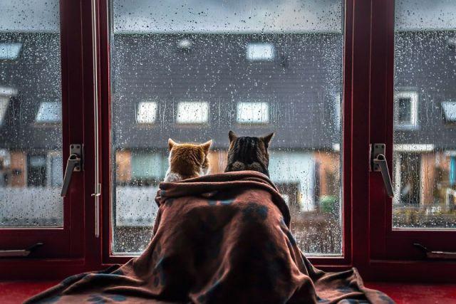 30 ноября на Ставрополье ожидаются осадки в виде дождя и мокрого снега