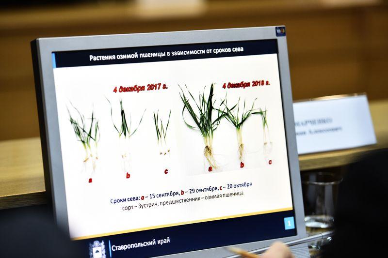 На Ставрополье поддержка сельских территорий продолжит расти