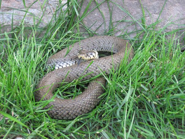 В частный дом на Ставрополье заползла змея