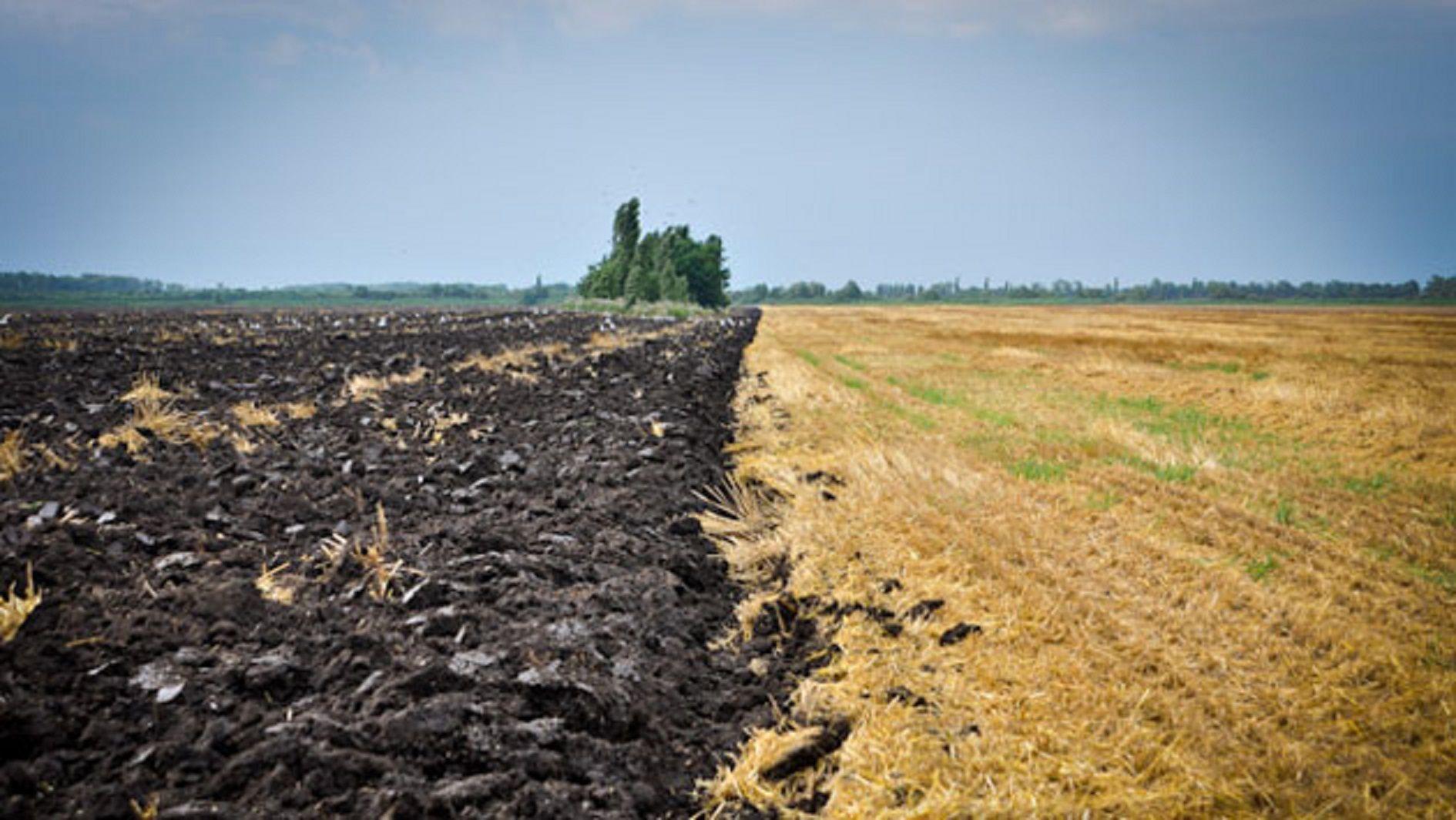 взять в аренду землю под сельское хозяйство в краснодарском крае они собирались