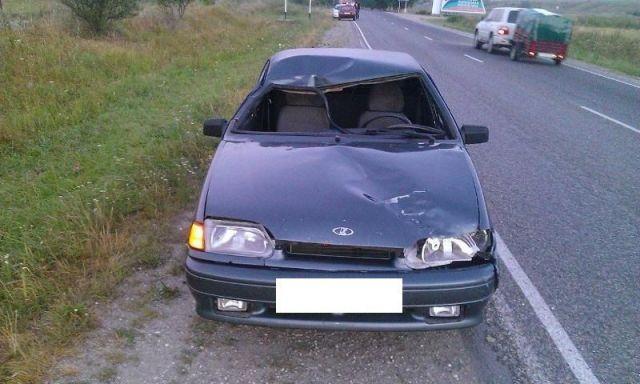 В Ставропольском крае водитель легковушки насмерть сбил лошадь