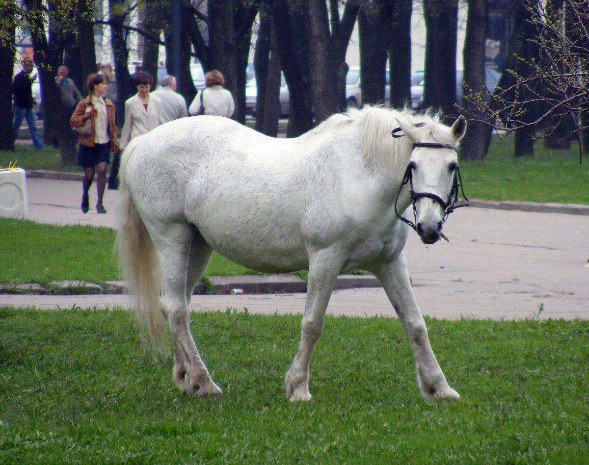 В Кисловодске коровам и лошадям запретили свободно гулять по городу