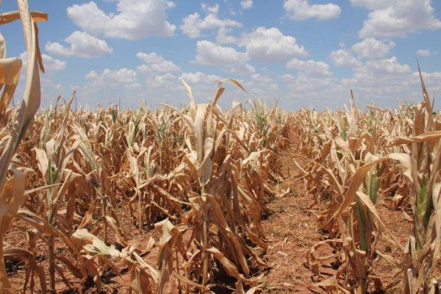Будущему урожаю на востоке Ставрополья угрожает засуха