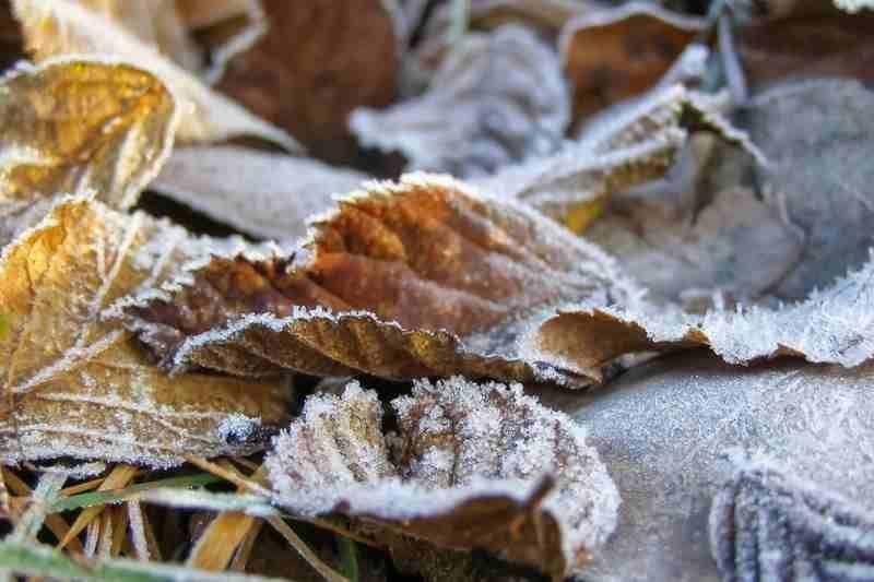 На Ставрополье 13 и 14 октября ожидаются заморозки до -1 градуса