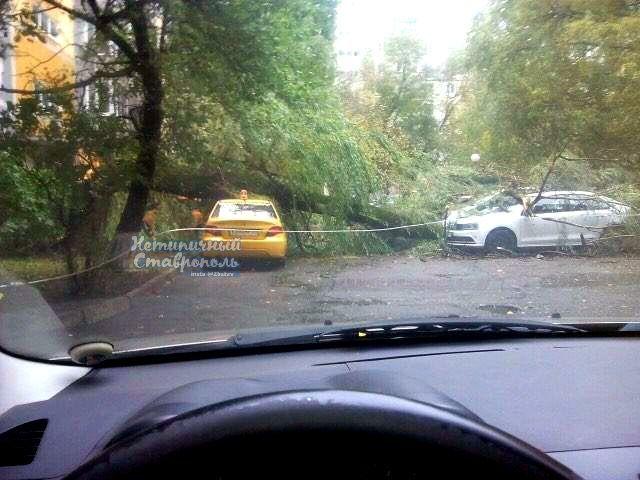 Во дворах Ставрополя деревья упали на припаркованные автомобили