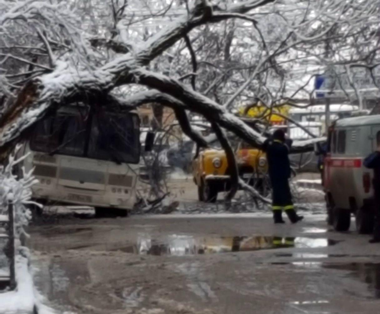 В Пятигорске дерево упало на автобус