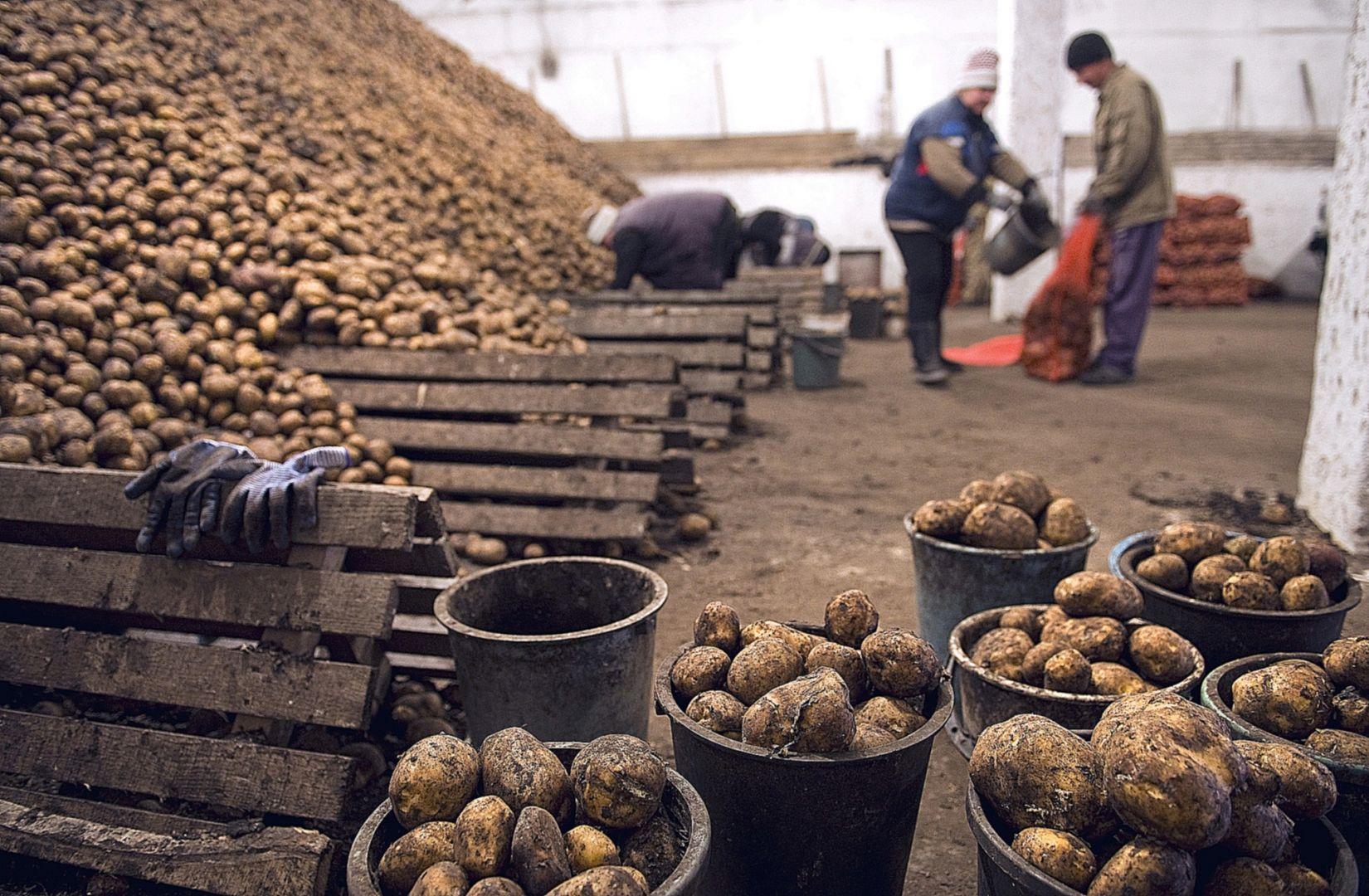 Овощехранилище на2 тысячи тонн достраивает под Арзгиром Рита Пак