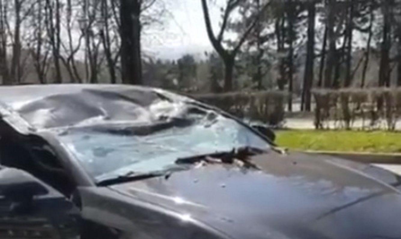 В Пятигорске на машину рухнуло дерево, пострадала девушка