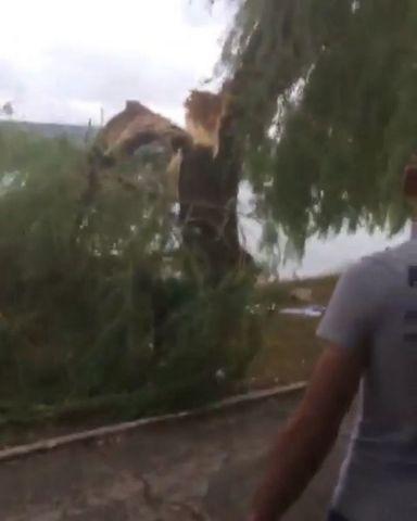 В Пятигорске из-за сильных порывов ветра дерево упало на двух женщин