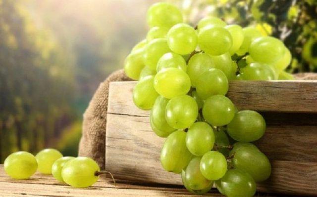 Международный праздник «Молодое вино» пройдёт в Кисловодске
